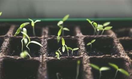 Saving Seed, Catching Water